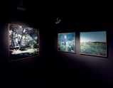 "Installation view of artwork ""Dejeuner sur l'herbe, Perdicaris forest, Rmilet, Tagier"", ""Litterature Student, Peddicaris Forest, Tangier"" and ""Picnic Van Rouge"" by Yto Barrada of exhibition Everyday Matters 27"