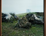 "Photo of artwork by ""Three Eucalyptus Stumps Ziaten Tangier"" by Yto Barrada of exhibition Every Day Matters 1"